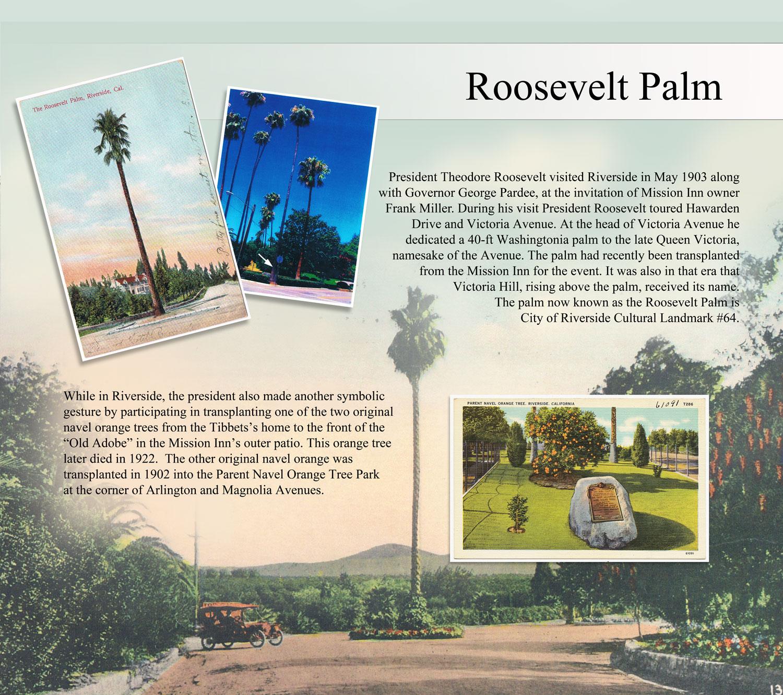 Roosevelt Palm